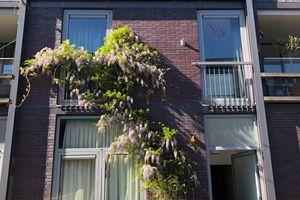 Te huur: Huurwoning Amsterdam Scheepstimmermanstraat