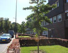 Appartement Willem van Nassaulaan in Den Bosch